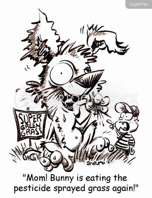 pet rabbit cartoon