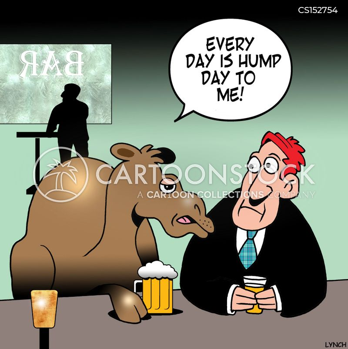 hump day cartoon