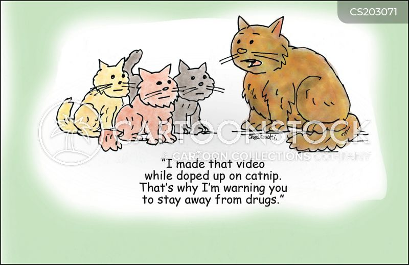cat videos cartoon