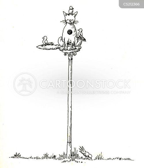 birdfeed cartoon
