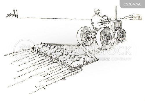 tilling cartoon