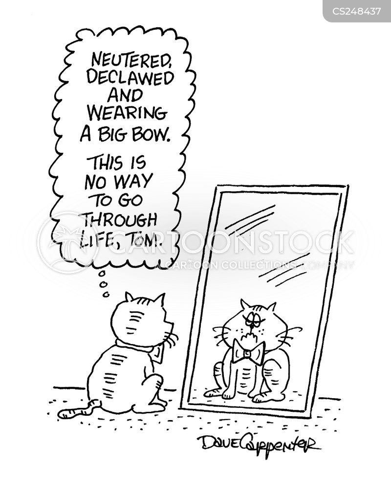 tom cat cartoon