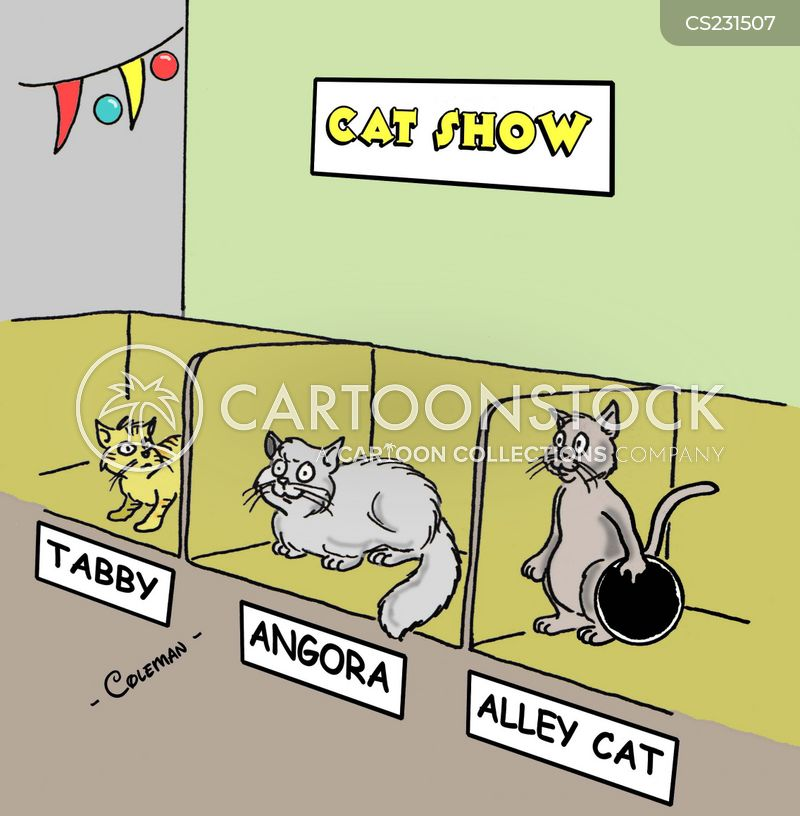 animals-cat-feline-pet-pet_cat-cat_show-rcln185_low.jpg