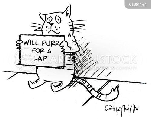 pet kitten cartoon