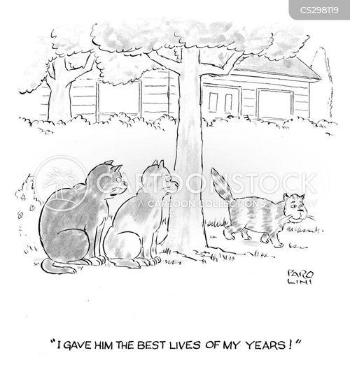 cats life cartoon