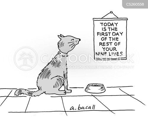 nine cartoon