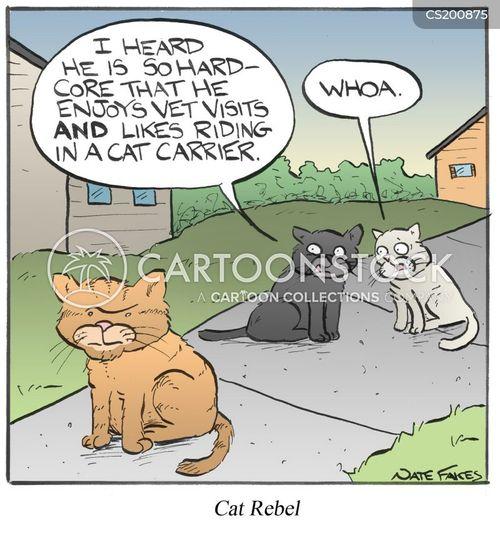 cat carrier cartoon