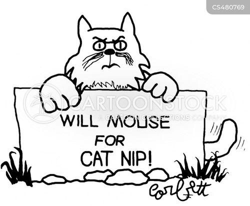 cat nip cartoon