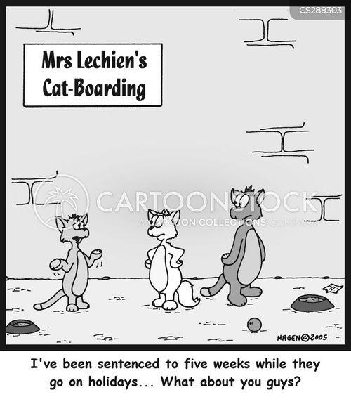 cattery cartoon
