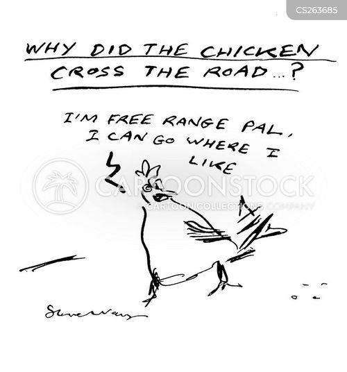 free range chickens cartoon