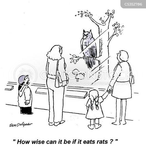 aviary cartoon