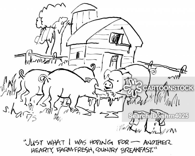 pig-sty cartoon