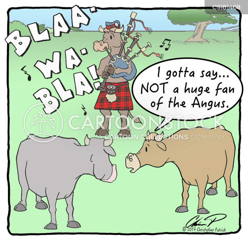 angus cows cartoon