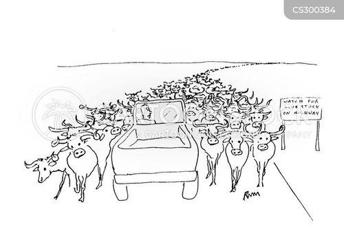 cattle farms cartoon