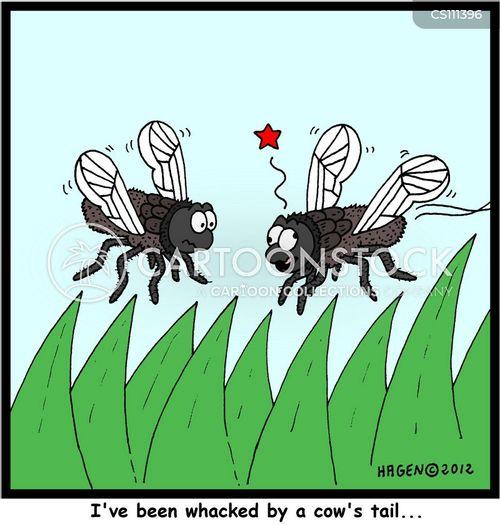 cow poops cartoon