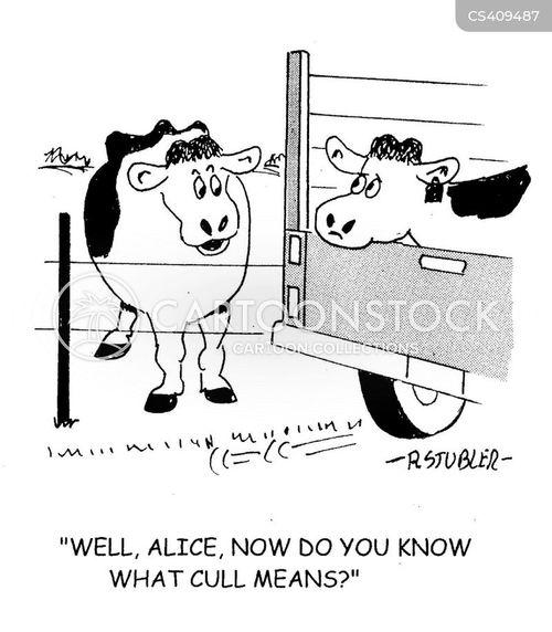 beef farms cartoon