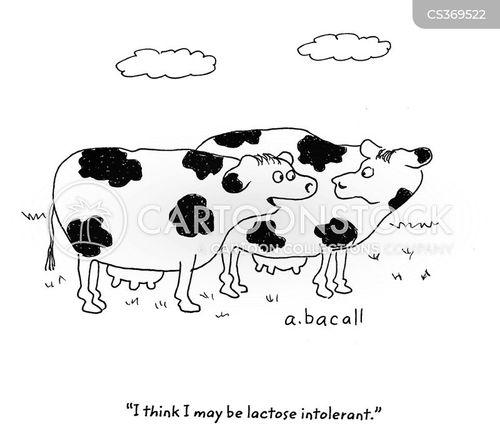 lactose cartoon