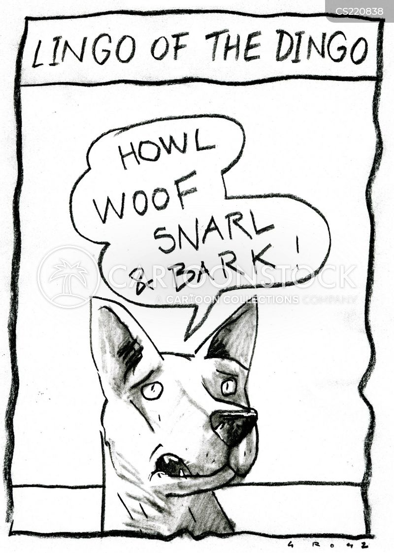 dingos cartoon