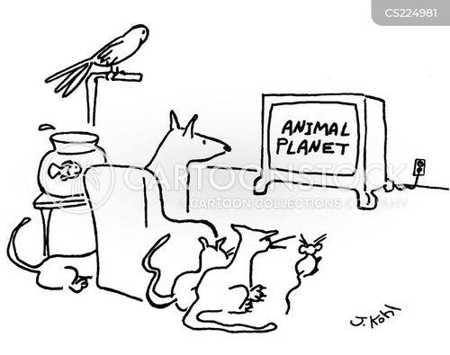 animal show cartoon
