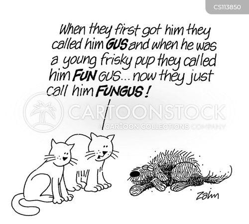 dog name cartoon