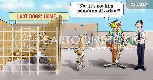 alsatians cartoon