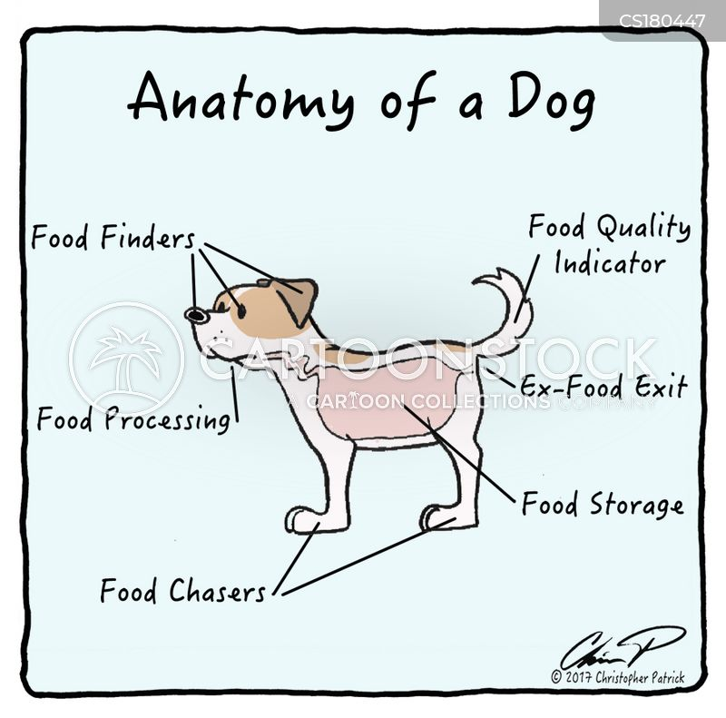 anatomy cartoon