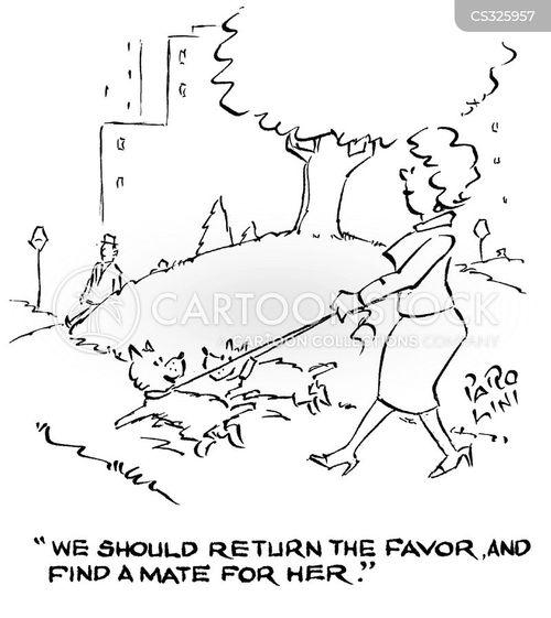 find a mate cartoon