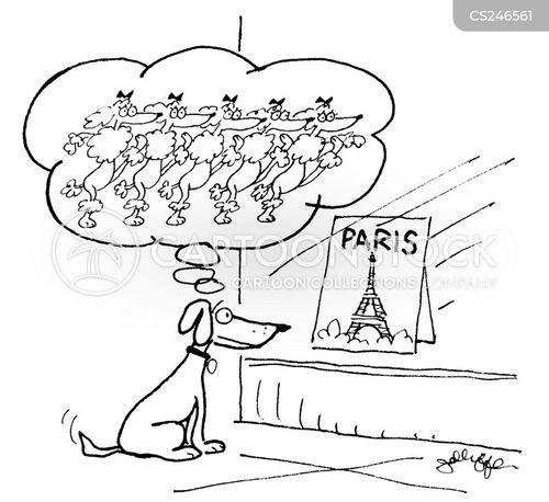 cancan cartoon