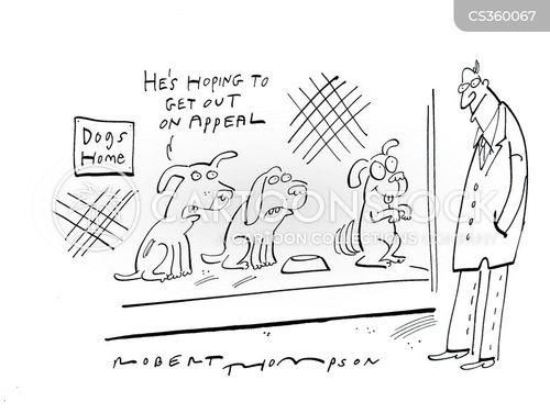 animal charity cartoon