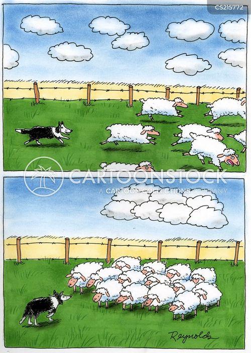 collies cartoon