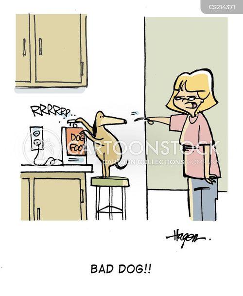 caninie cartoon