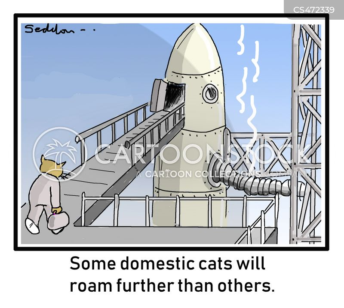domestic cats cartoon