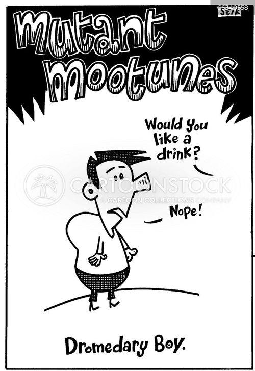 dromedary cartoon