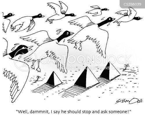 migratory birds cartoon