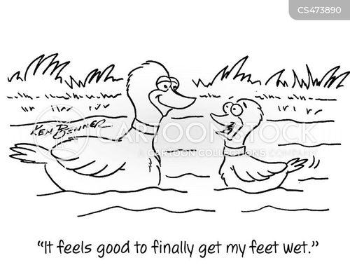 water-fowl cartoon