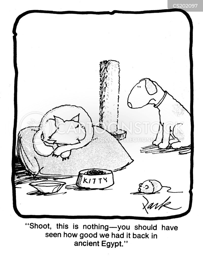 Cat Beds Cartoons And Comics Funny Pictures From Cartoonstock