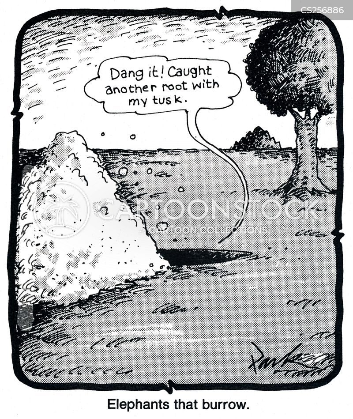 burrows cartoon