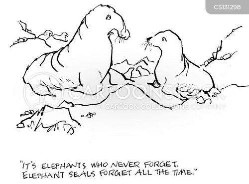 elephant seal cartoon