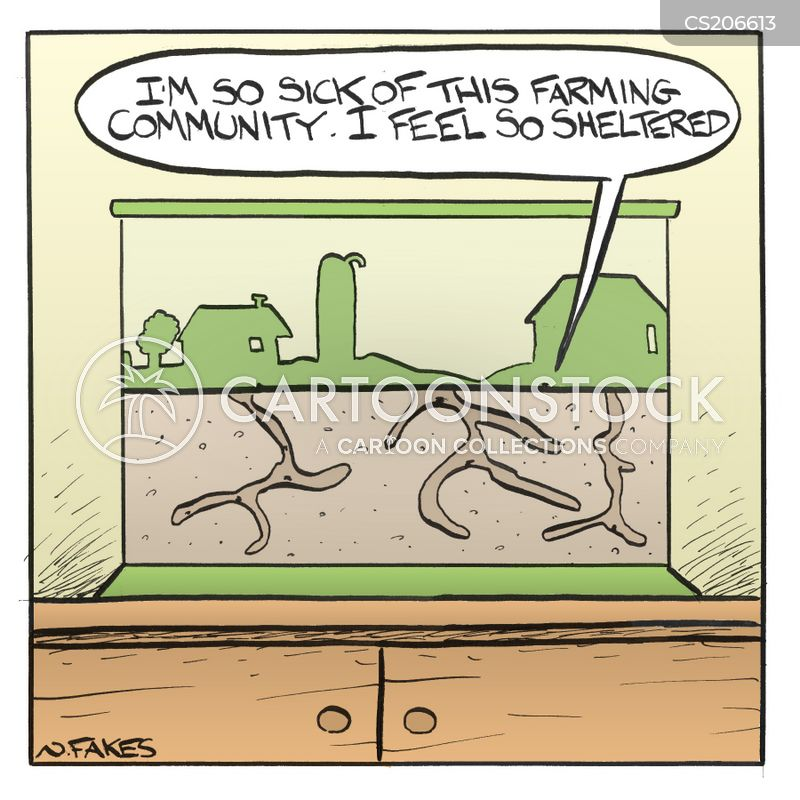 ant farms cartoon