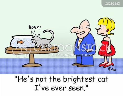 stupid cat cartoon