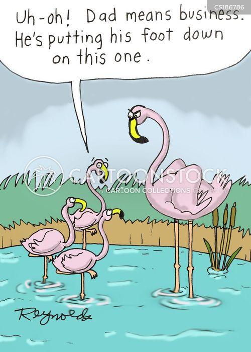 flamingo cartoon
