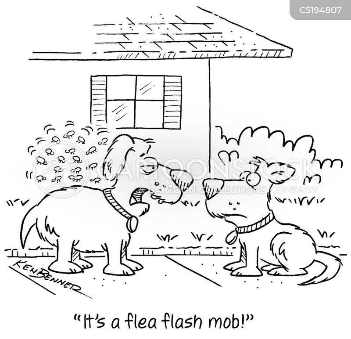flash mob cartoon