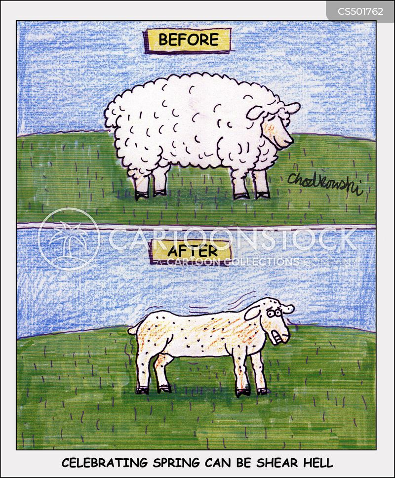 sheep shearers cartoon