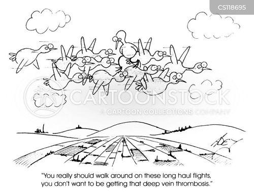 economy flights cartoon