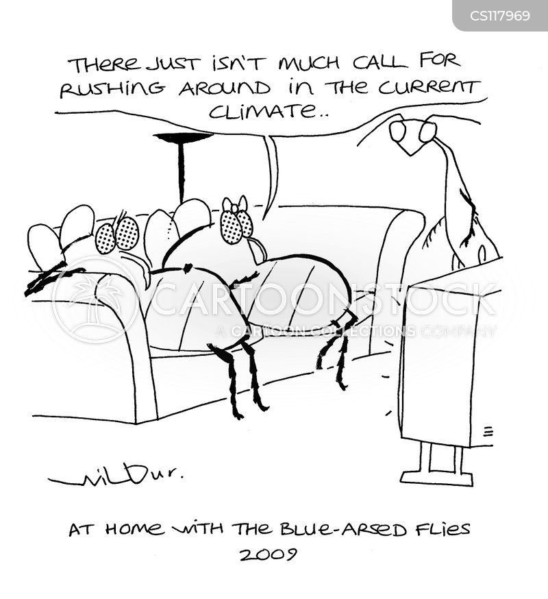 bluebottles cartoon