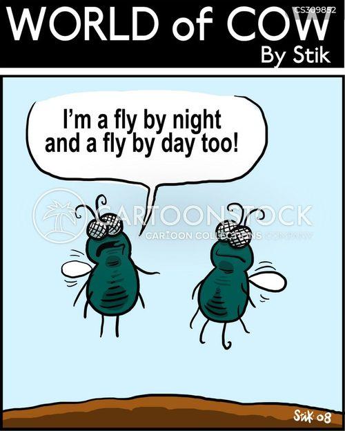 fly by night cartoon