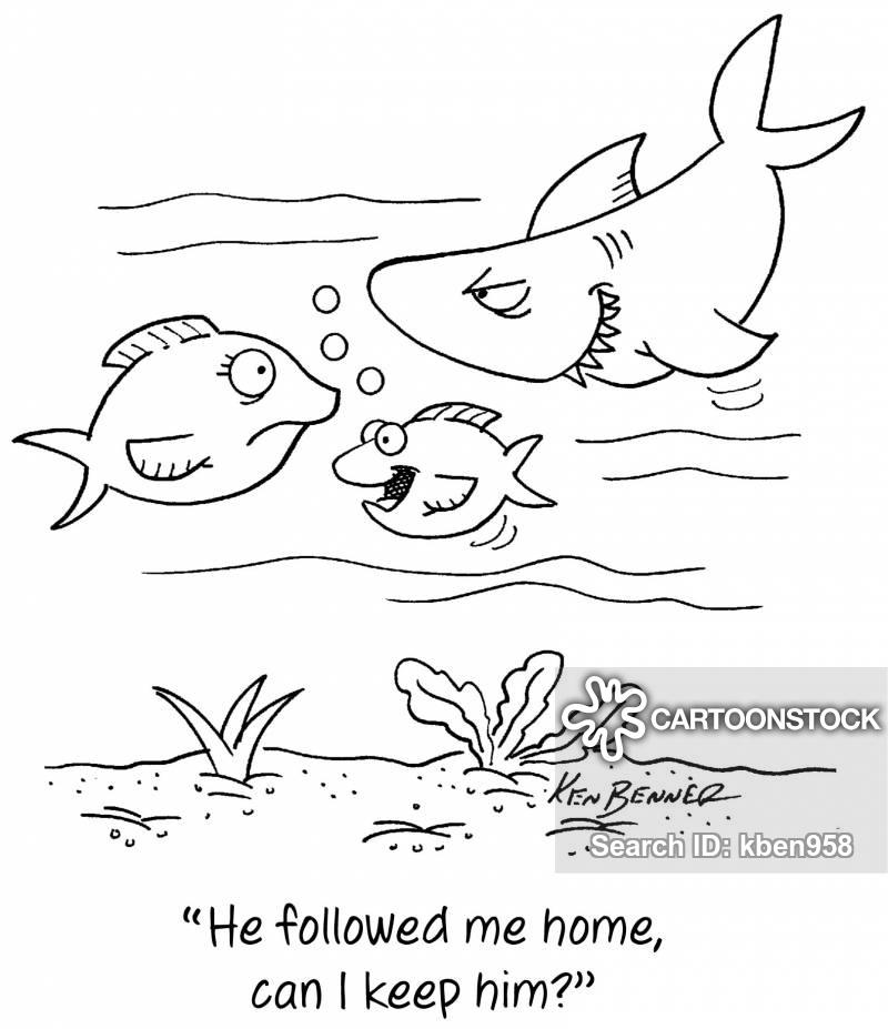 pet sharks cartoon