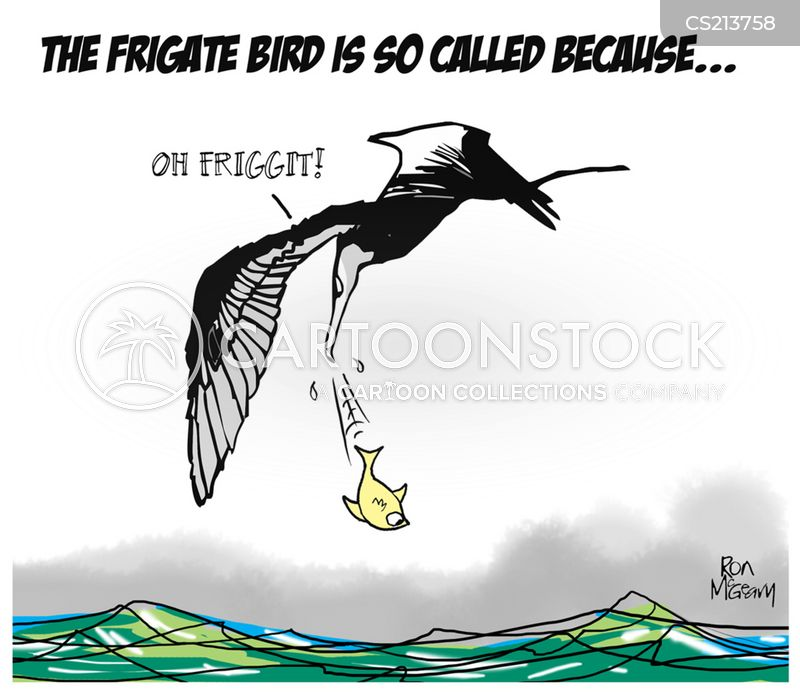 seabird cartoon