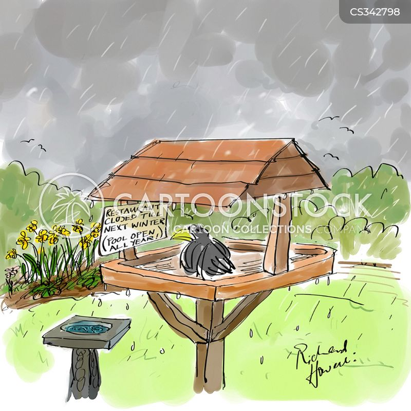 bird-bath cartoon