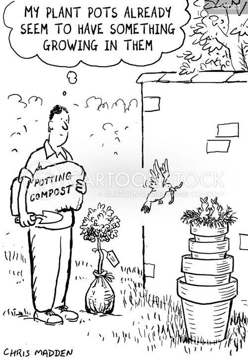 plant pot cartoon